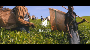 Thumbnail_Tea Addicts Malawi